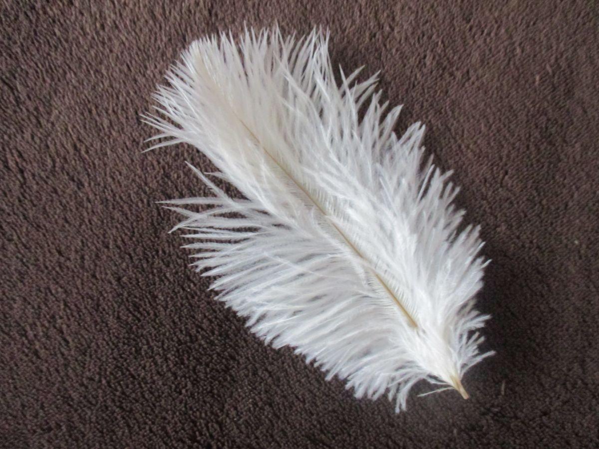 Pštrosí pěří bílé 12 - 20 cm