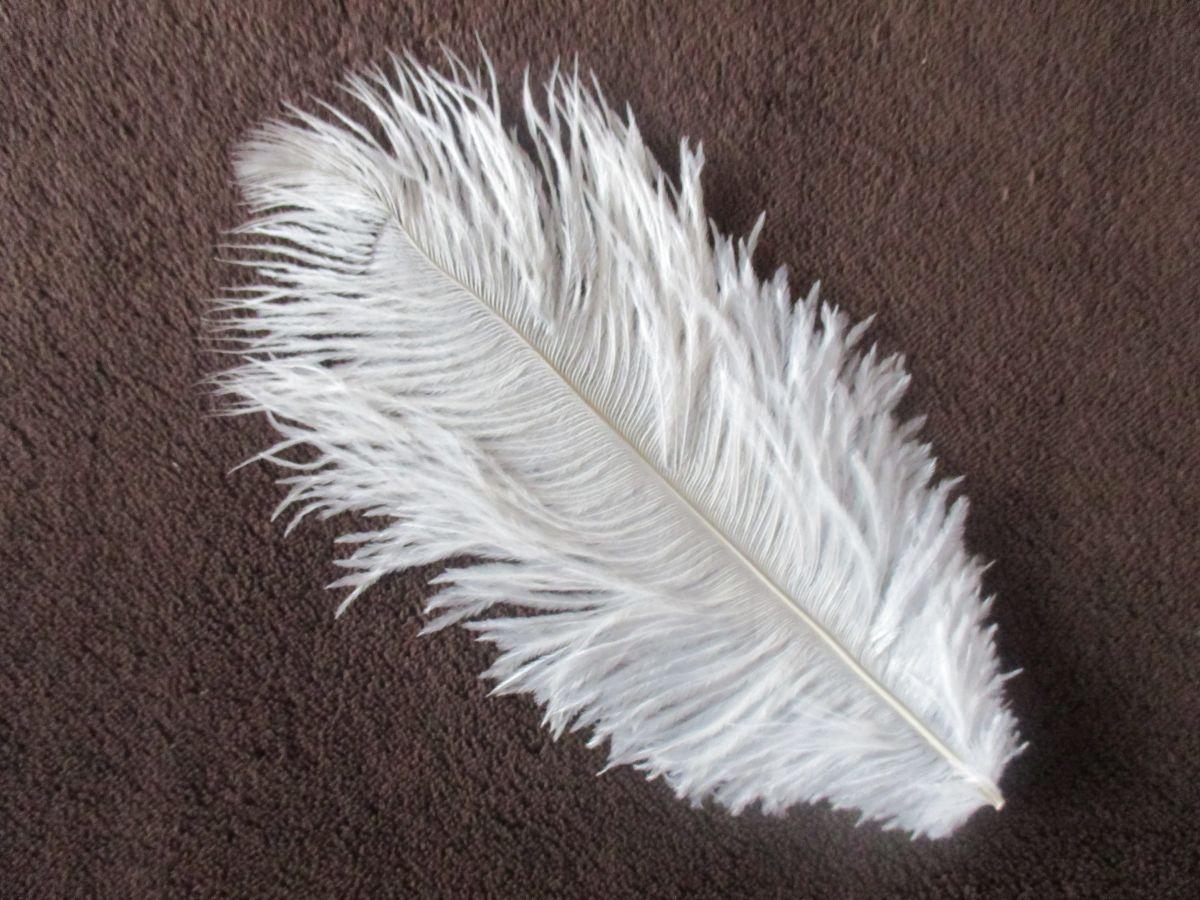 Pštrosí peří bílé 25 - 30 cm ( jemný brk )
