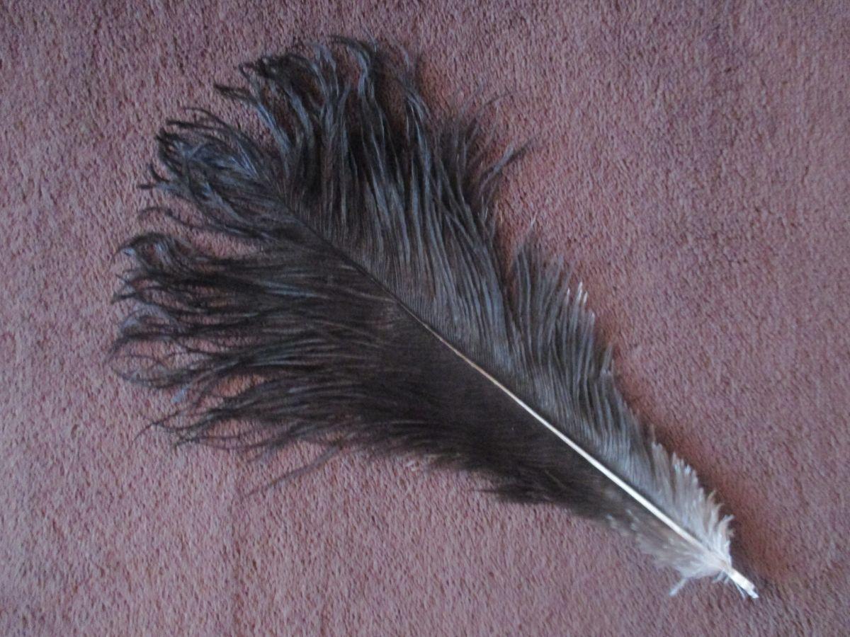 Pštrosí peří černé 30 - 35 cm