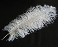 Pštrosí peří bílé 50 - 55 cm