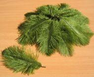 Pštrosí peří břečťan 5 - 12 cm
