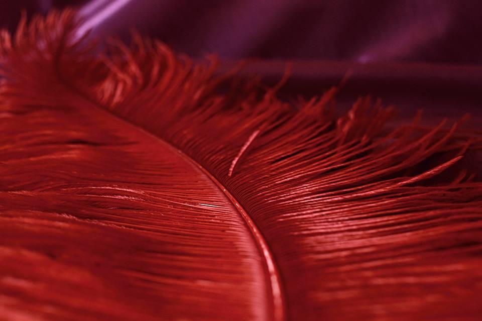 Pštrosí peří červené 55 - 60 cm