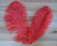 Pštrosí peří červené 25 - 30 cm