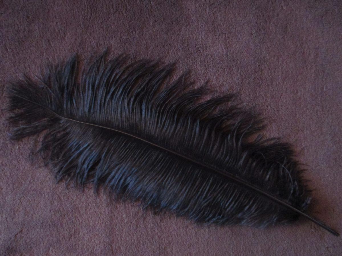Pštrosí peří černé 55 - 60 cm