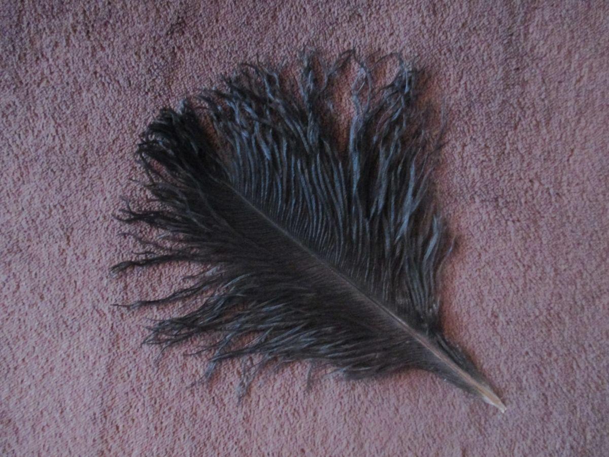 Pštrosí peří černé 12 - 20 cm