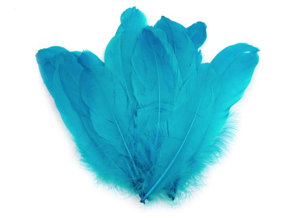Husí peří modré tyrkys 16-21 cm