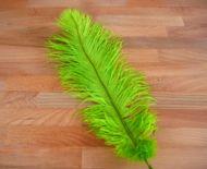 Pštrosí peří světle zelené 35 - 40 cm