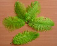 Pštrosí peří světle zelené 12 - 20 cm