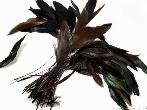 Kohoutí peří hnědá kávová 13-18 cm
