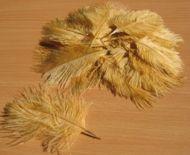 Pštrosí peří béžové 5 - 12 cm