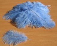 Pštrosí peří světle modré 5 - 12 cm