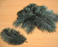 Pštrosí peří lahvově zelené 5 - 12 cm