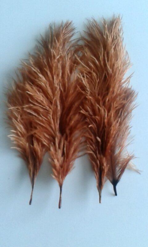 Pštrosí peří cibulové 20 - 25 cm