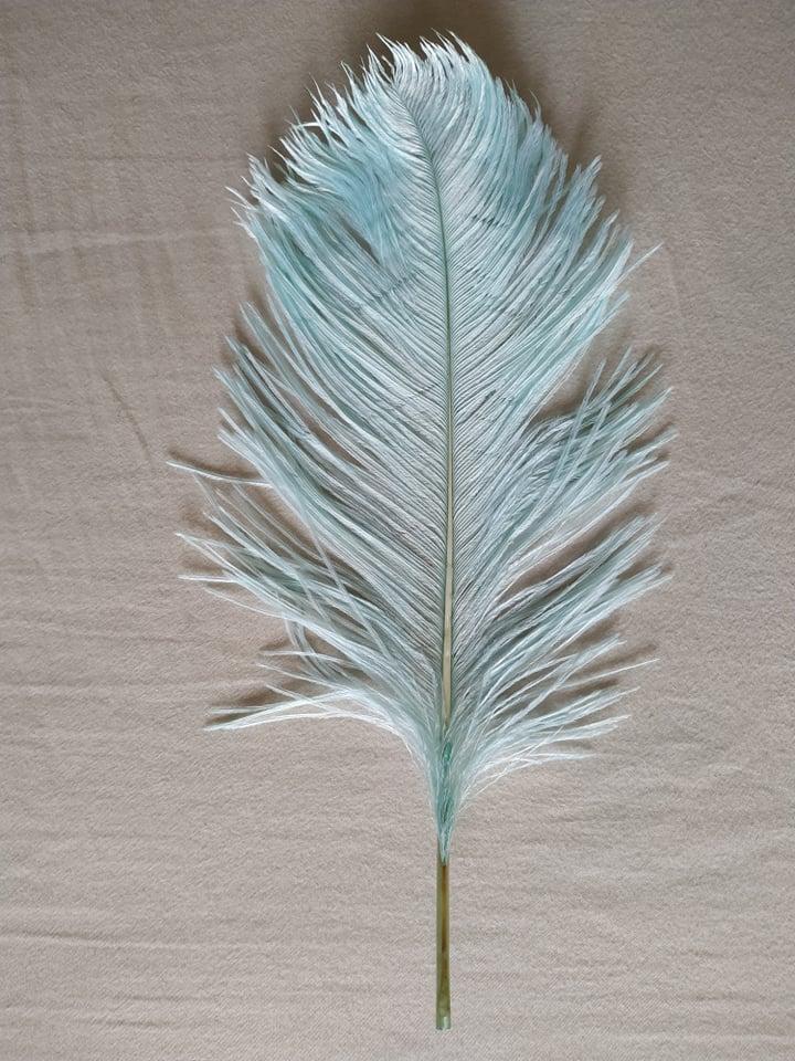 Pštrosí peří pistáciové 30 - 35 cm