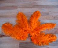 Pštrosí peří oranžové 12 - 20 cm