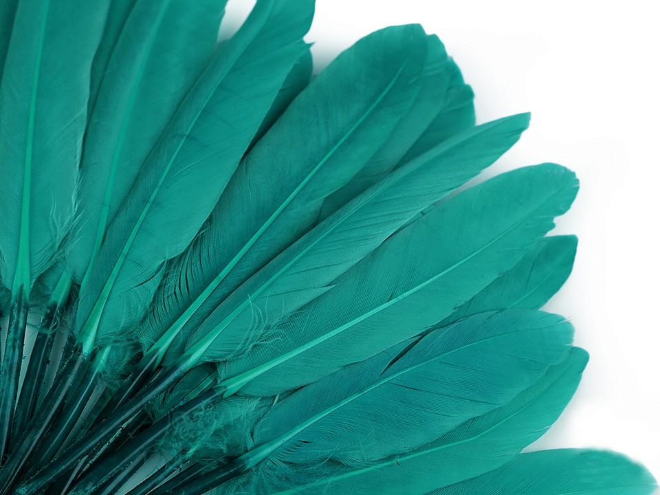 Kachní peří zelená tyrkys 9 - 14 cm