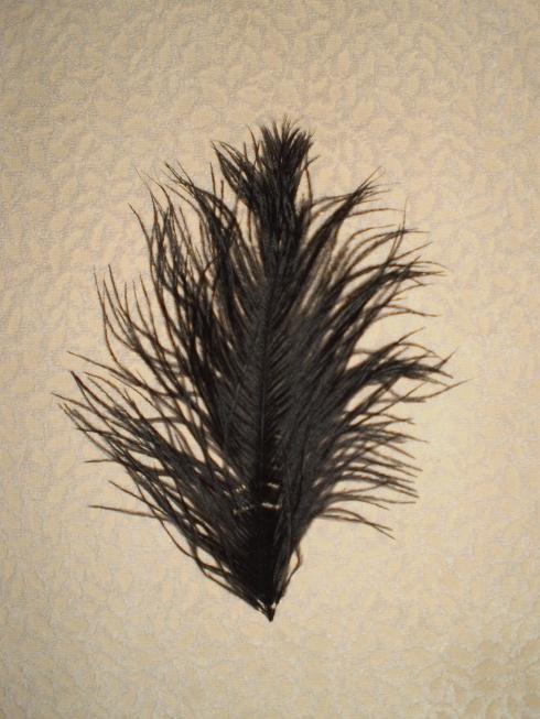 Pštrosí peří černé 20 - 25 cm