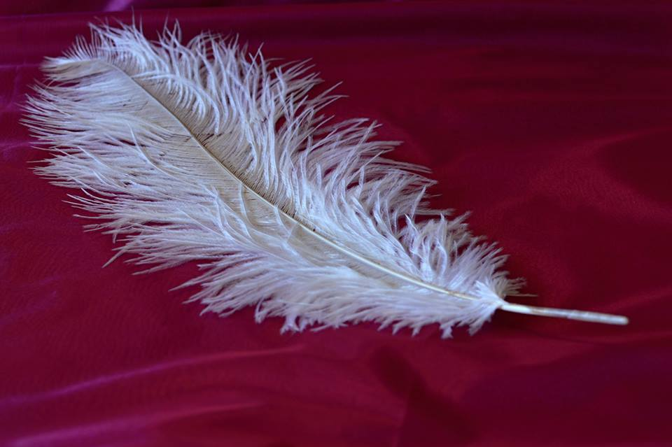Pštrosí peří bílé 55 - 60 cm