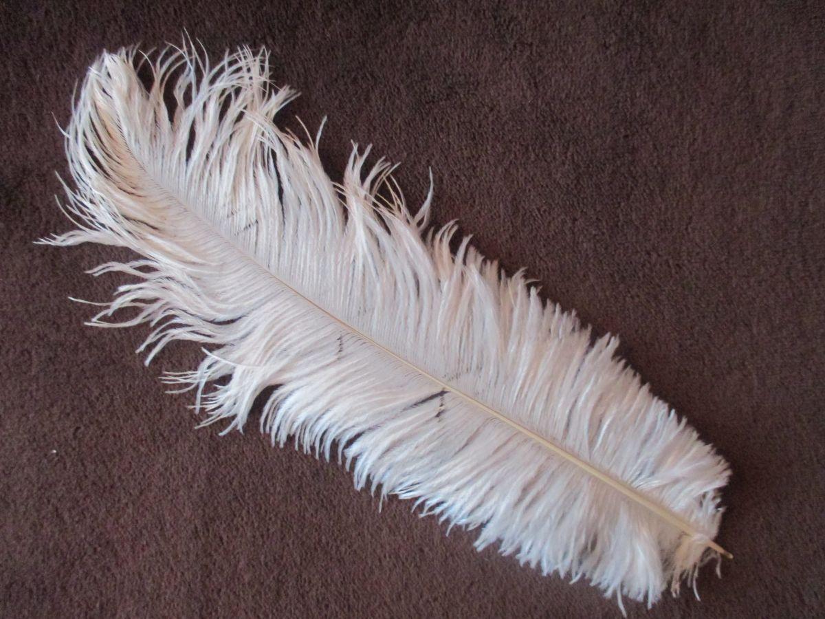 Pštrosí peří bílé 45 - 50 cm