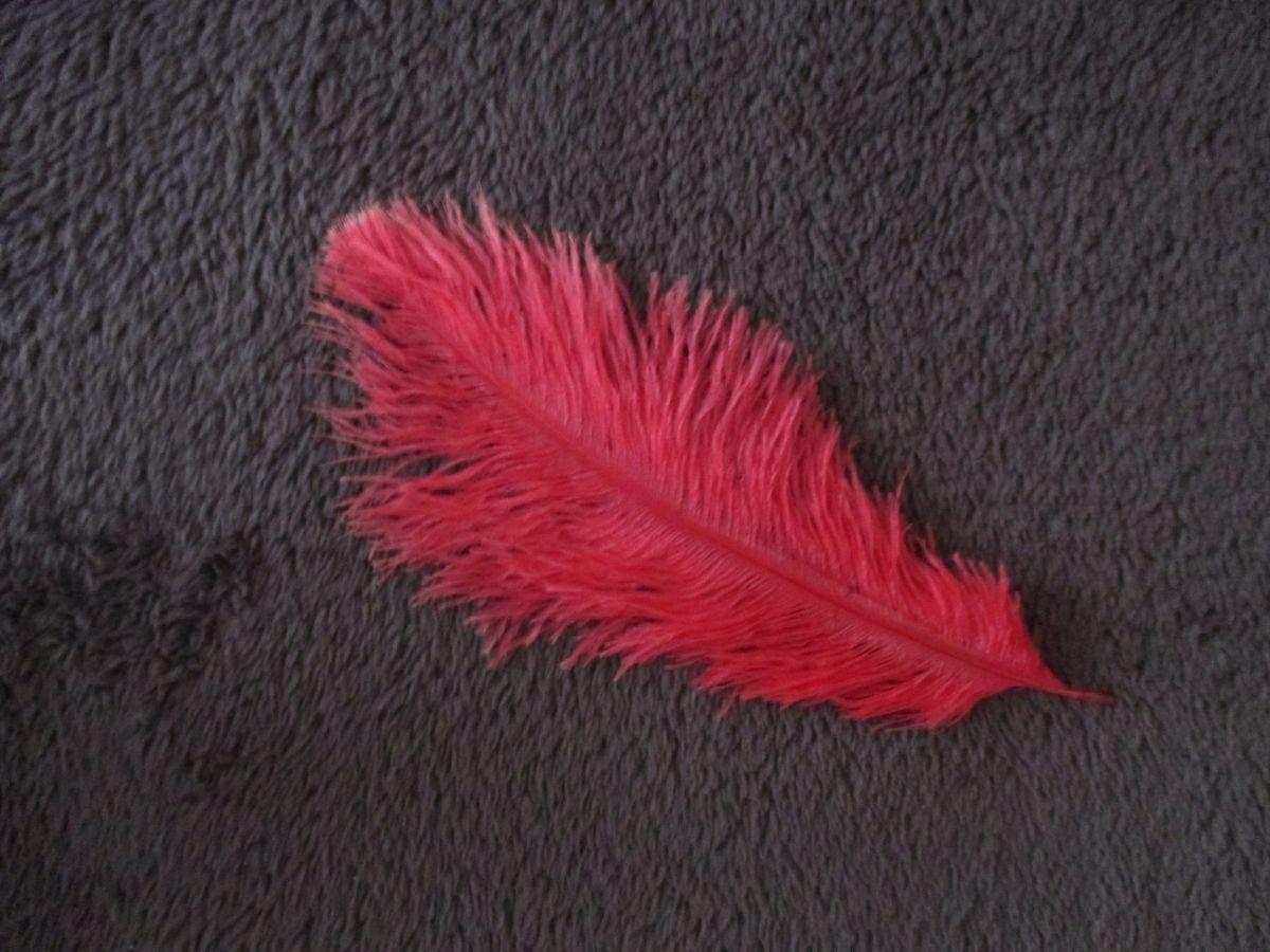 Pštrosí peří červené 12 - 20 cm