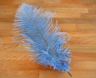 Pštrosí peří světle modré 30 - 35 cm