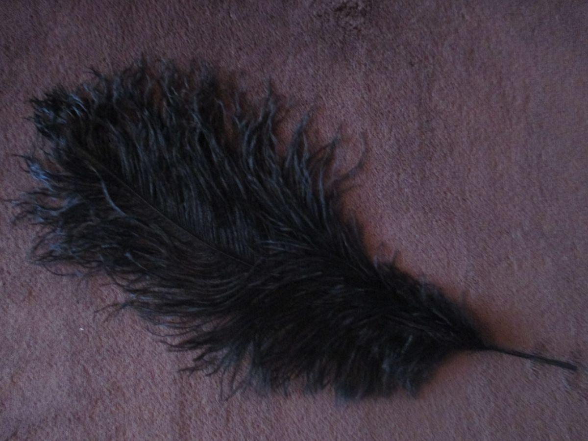 Pštrosí peří černé 50 - 55 cm