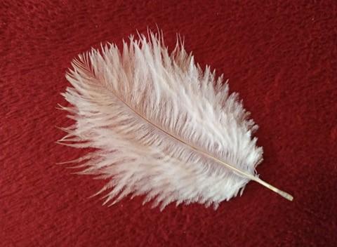Pštrosí peří bílé 5 - 12 cm