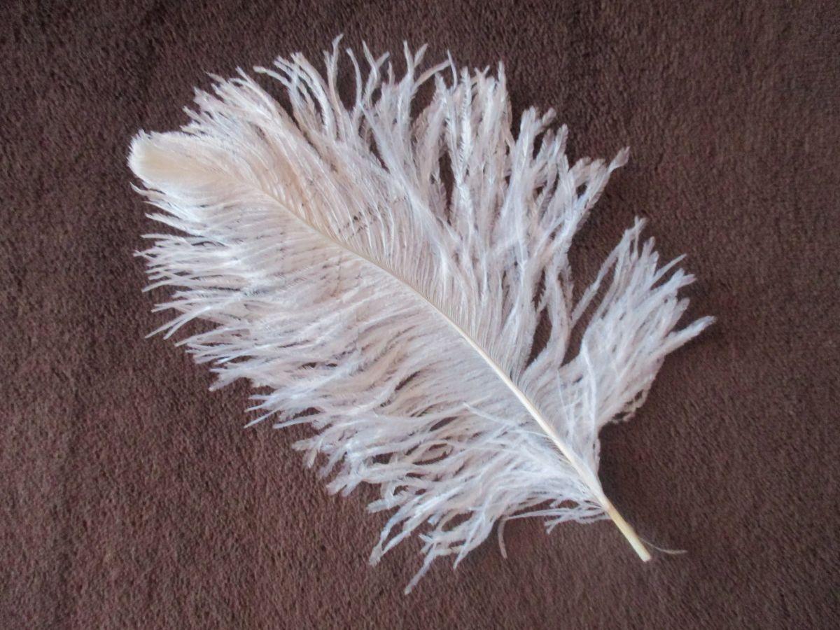 Pštrosí pěří bílé 25 - 30 cm