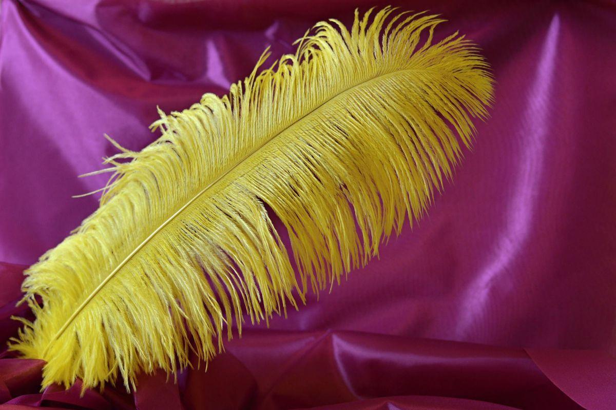 Pštrosí peří žluté 55 - 60 cm