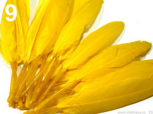 Kachní peří žluté 9-14 cm