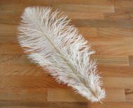 Pštrosí peří bílé 40 - 45 cm