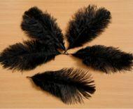 Pštrosí peří černé barvené 20 - 25 cm
