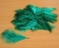 Pštrosí peří smaragdové 5 - 12 cm
