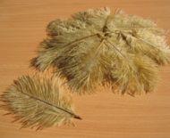 Pštrosí peří stará zlatá 5 - 12 cm