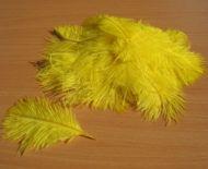 Pštrosí peří žluté 5 - 12 cm