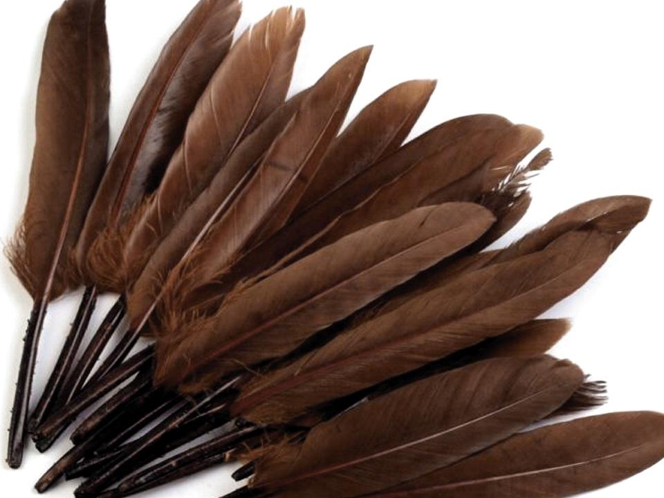 Kachní peří hnědé 9 - 14 cm