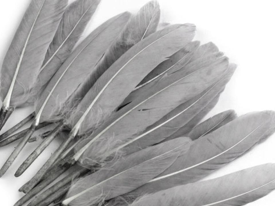 Kachní peří světle šedé 9 - 14 cm