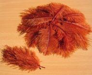 Pštrosí peří vínové 5 - 12 cm