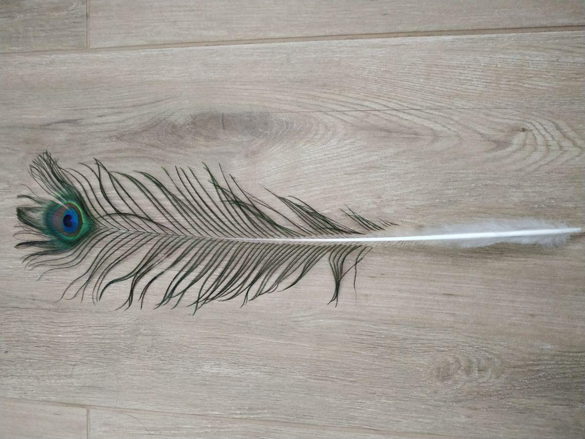 Paví peří délka 30 - 70 cm
