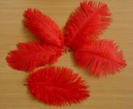 Pštrosí peří červené 20 - 25 cm 10 ks
