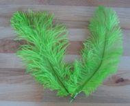 Pštrosí peří světle zelené 20 - 25 cm 10 ks