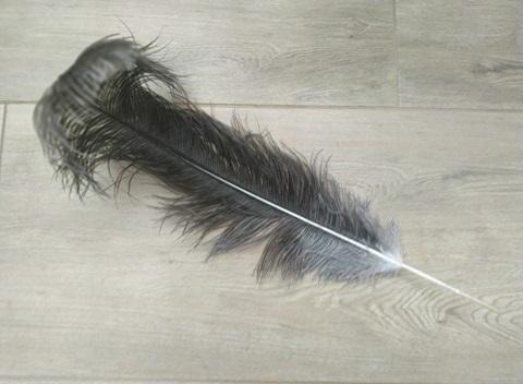 Pštrosí šedé přírodní 55 - 60 cm