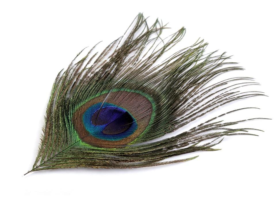 Paví peří délka 16-20 cm